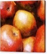 Pears D'anjou Canvas Print