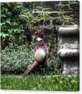 Peasant Pheasant Canvas Print