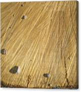 Pebbles And Texture On A Crosscut Log Canvas Print