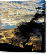 Pebbles Beach Pine Tree Canvas Print