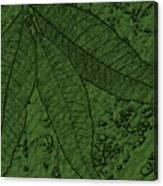 Pecan Tree Leaves Canvas Print