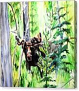 Peek A Boo Moose Canvas Print