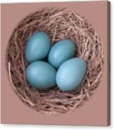 Peek Into A Robin's Nest Canvas Print