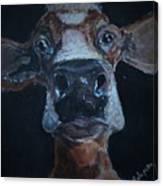 Peekaboo Moo Canvas Print