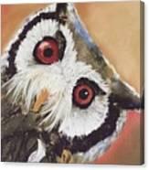 Peekaboo Owl Canvas Print