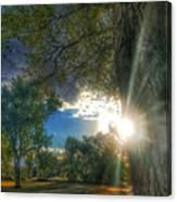 Peekaboo Tree Canvas Print