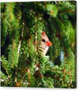 Peeking From The Pines Canvas Print