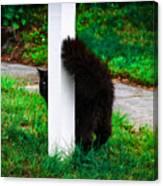 Peeking Kitty Canvas Print