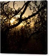 Peeking Sun Canvas Print