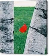 Peeking Tulip Canvas Print