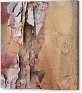 Peeling Bark Canvas Print