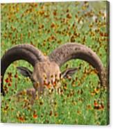 Peep-eye Canvas Print