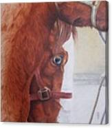 Peeping Paint Glin Fair Canvas Print