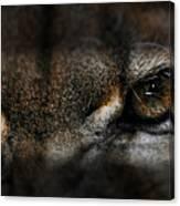 Peering Eyes Canvas Print