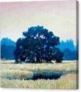Peggys Oak Canvas Print