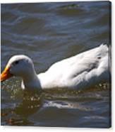 Pekin Duck 20120512_38 Canvas Print