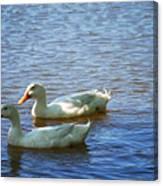 Pekin Ducks 20120515_15 Canvas Print