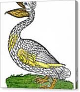 Pelican, 1560 Canvas Print