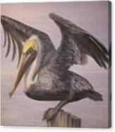 Pelican 2 Wings Spread Canvas Print