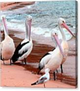 Pelican 5.0 Pearl Beach Canvas Print