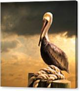 Pelican After A Storm Canvas Print