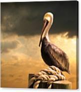 Pelican After A Storm Canvas Print