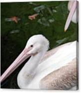 Pelican Canvas Print