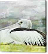 Pelican Art 0006 Canvas Print