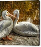 Pelican Bay  Canvas Print