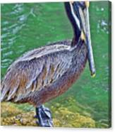 Pelican By The Pier Canvas Print