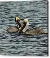 Pelican Couple Canvas Print