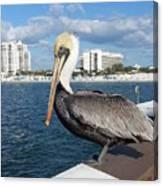 Pelican -florida Canvas Print