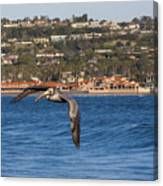 Pelican Flying Above The Pacific Ocean Canvas Print