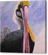 Pelican Head Canvas Print