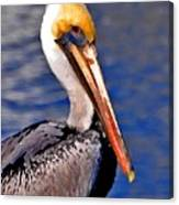 Pelican Head Shot Canvas Print