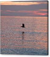Pelican In Flight At Dawn Canvas Print