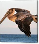 Pelican In Flight At Sunset Canvas Print