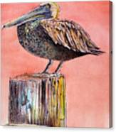 Pelican In Late Afternoon Canvas Print