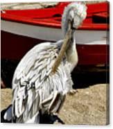 Pelican In Mykonos II Canvas Print