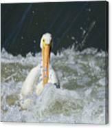 Pelican In Rough Water Canvas Print