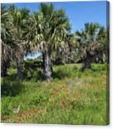 Pelican Island In Florida Canvas Print