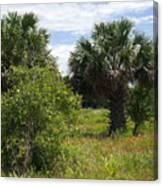 Pelican Island Nwr In Florida Canvas Print