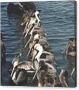 Pelican Line Canvas Print