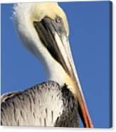 Pelican Mohawk Canvas Print