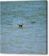 Pelican On The Move Canvas Print