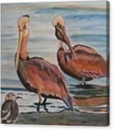 Pelican Party Canvas Print