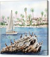 Pelican Rock Canvas Print