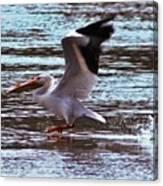 Pelican Skimming The Rock River Canvas Print