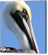 Pelican Soft Canvas Print