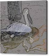 Pelican Swim IIi Color Pencil Canvas Print